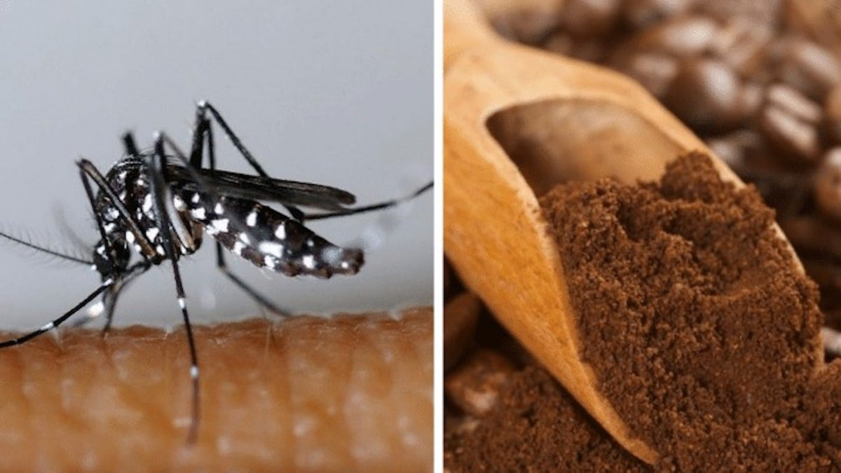 Moustiques: La meilleure technique pour s'en débarrasser définitivement, avec du Marc de Café !