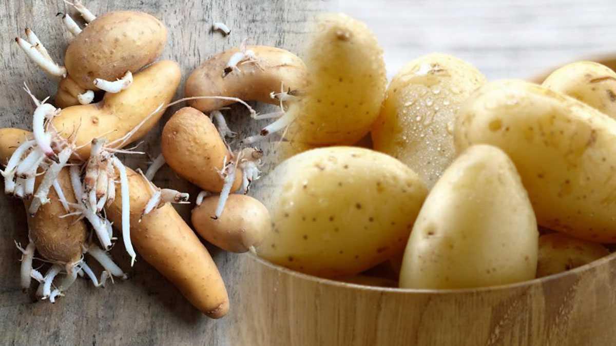 Pommes de terre : Comment éviter qu'elles germent ? ces astuces étonnantes qui vont vous changer la vie!